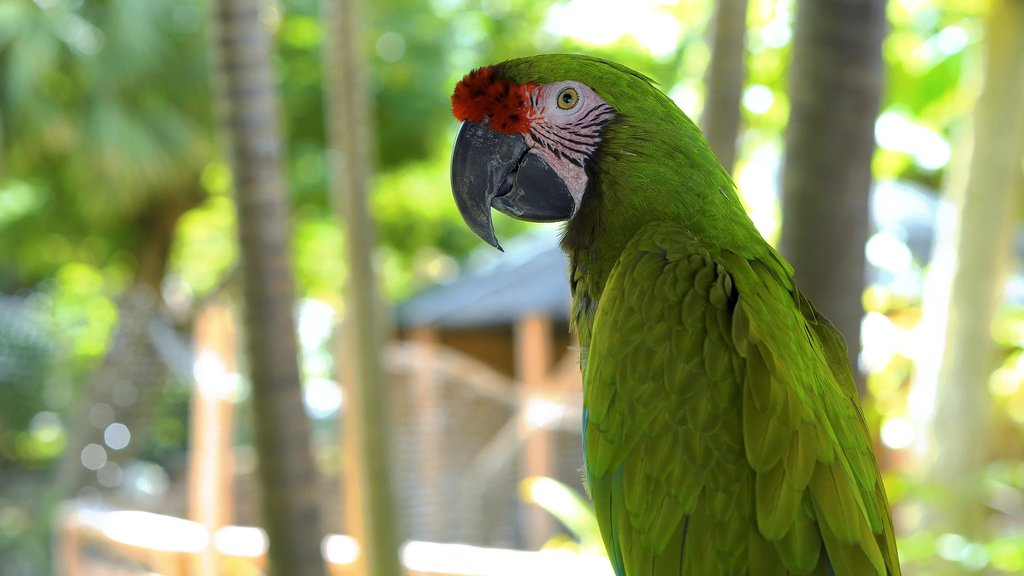You might spot a green macaw on the riverbanks