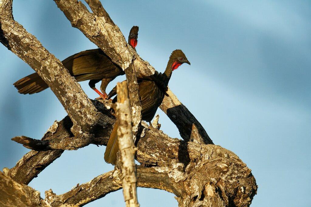 Yucatan Wildlife