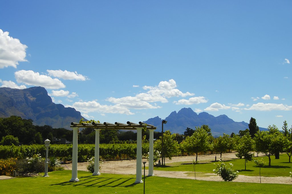 A Stellenbosch vineyard