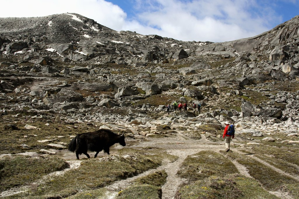 Yaks along the trail