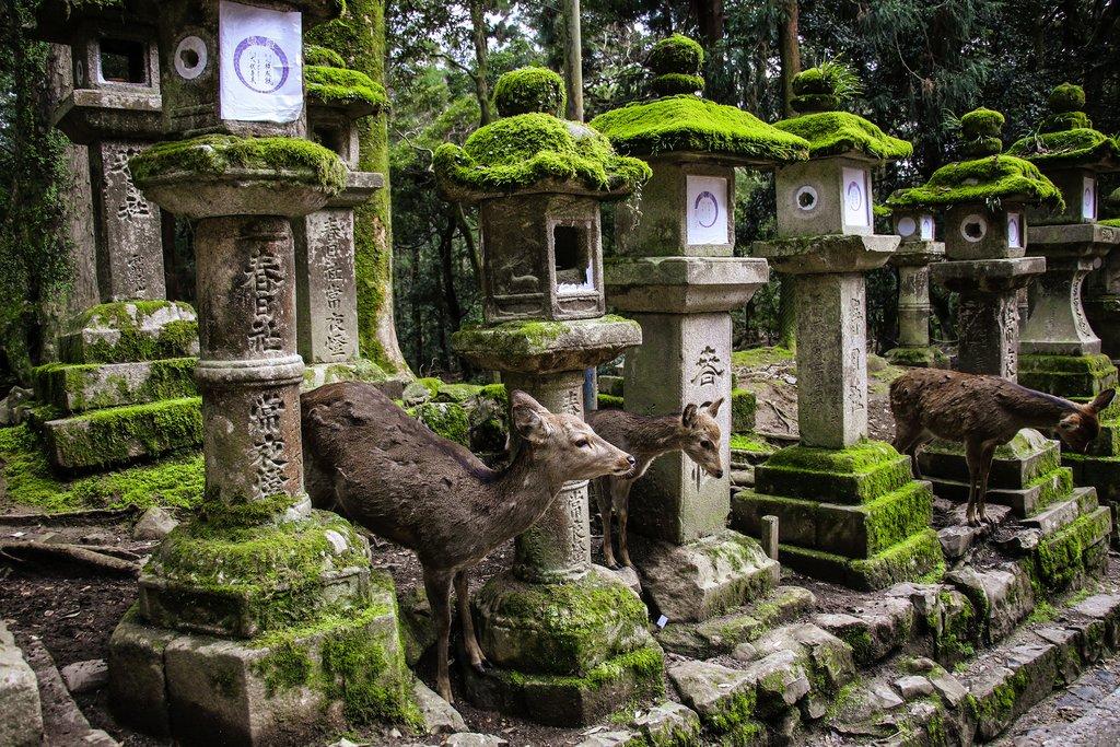 Deer Among Ancient Stone Lanterns at Nara