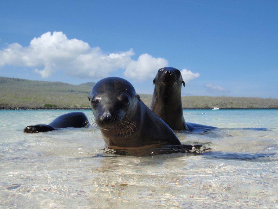 Sea lion puppies