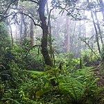 Part of the excursion involves walking on cloud-forest trails