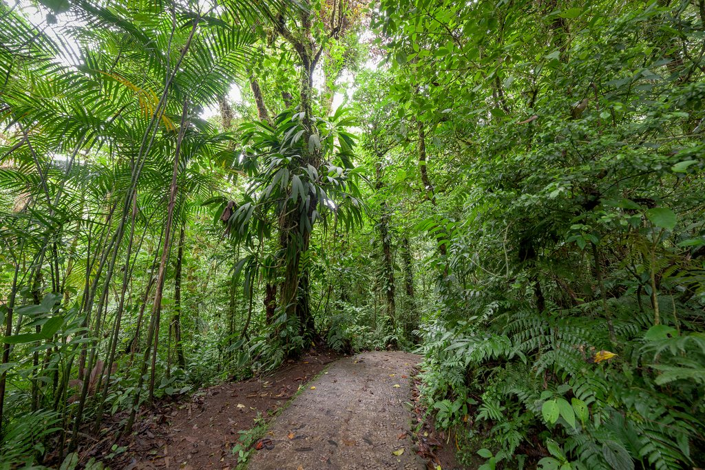 A hiking trail in Monteverde