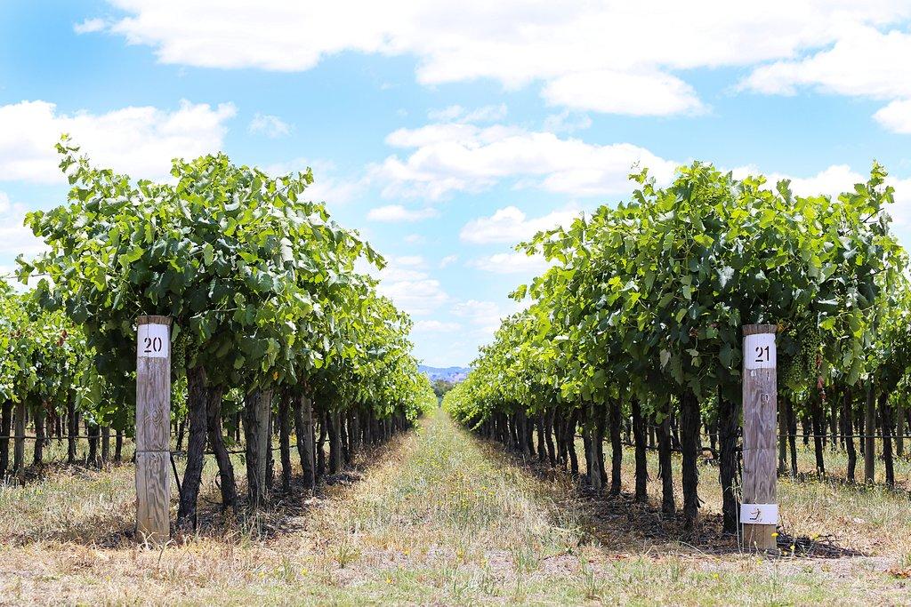 The vineyards in Mudgee