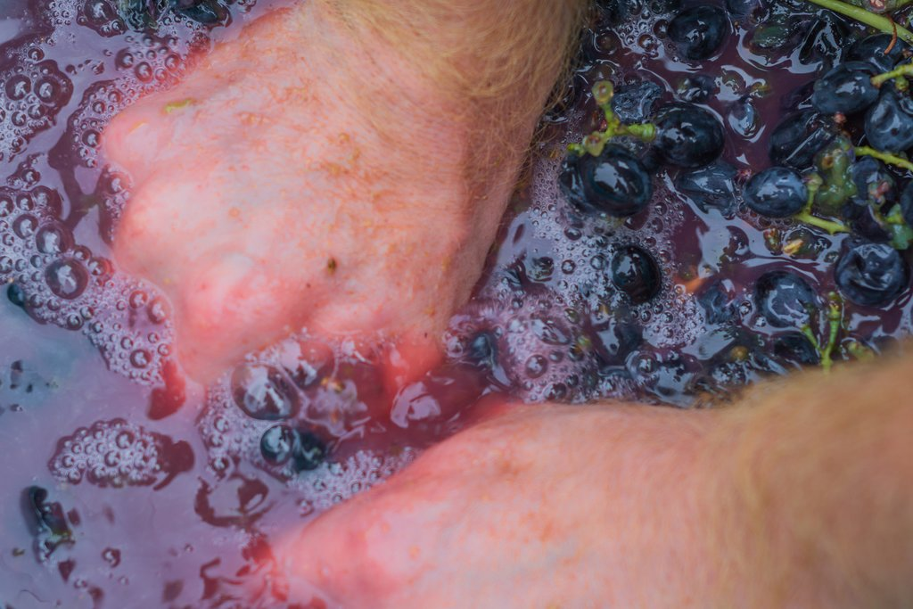 Crushing grapes for wine