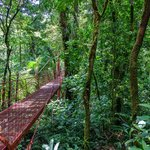 The cloud forests of Monteverde and Santa Elena