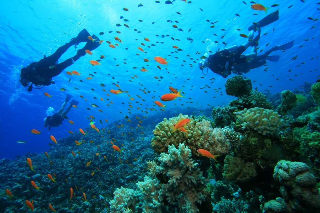 Explore the coral reef and abundant sea life together at Manuel Antonio National Park