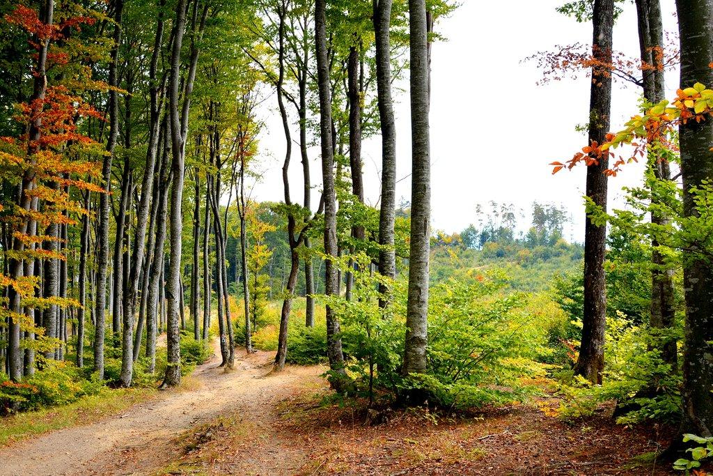Hiking Trail Near Poiana Brașov