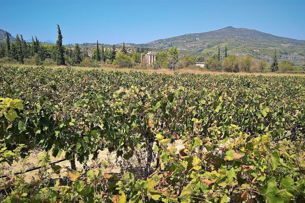 Learn About Winemaking and the Myths of Greek Gods and Heroes - Photo from MAMAKITA