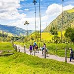 Into the Valle de Cocora