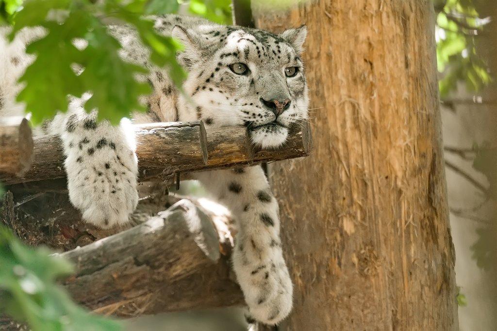 Sri Lanka - Wilpattu National Park - Leopard