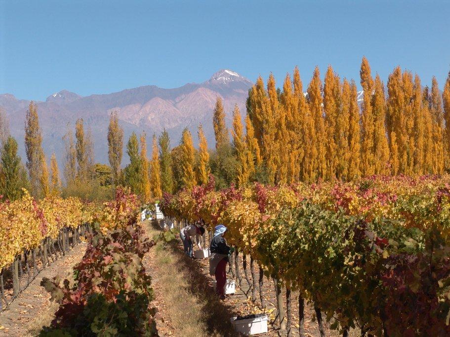 vineyards around Mendoza