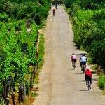 Cycling & Wine Tasting on Korčula