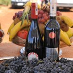 Guerrouane Region Winery Tour near Fes