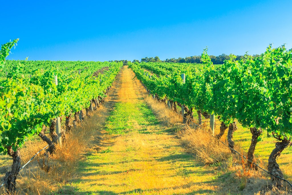 The vineyards in Margaret River