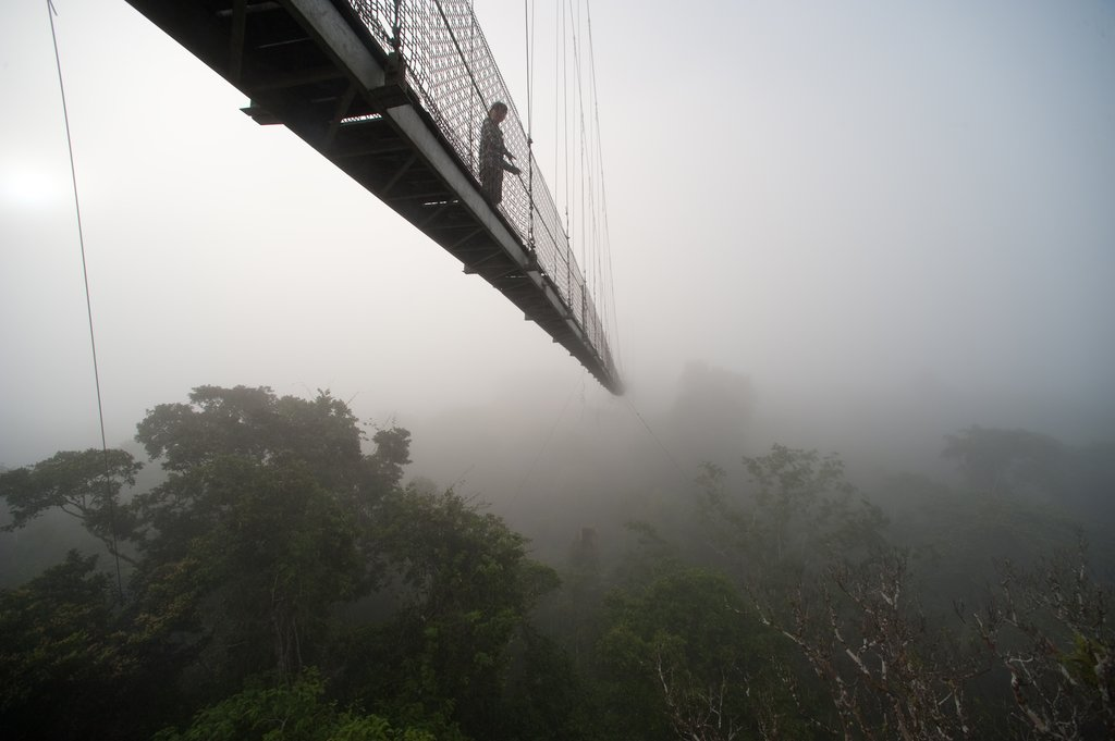 Observation Tower canopy walk