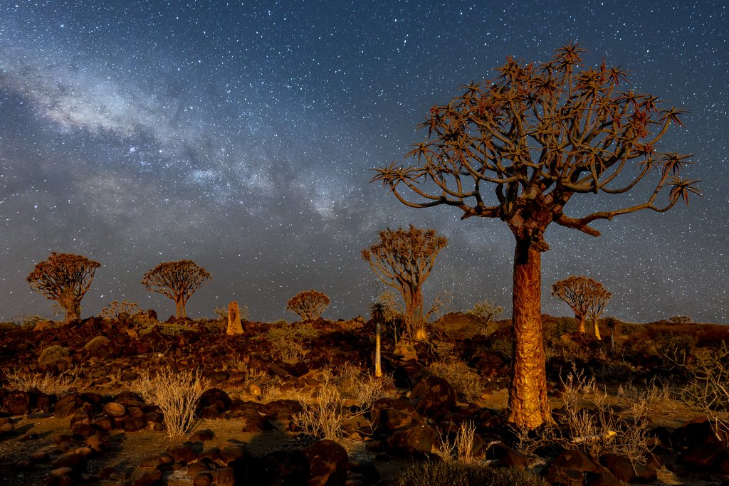 Stargazing in the quiver tree forest