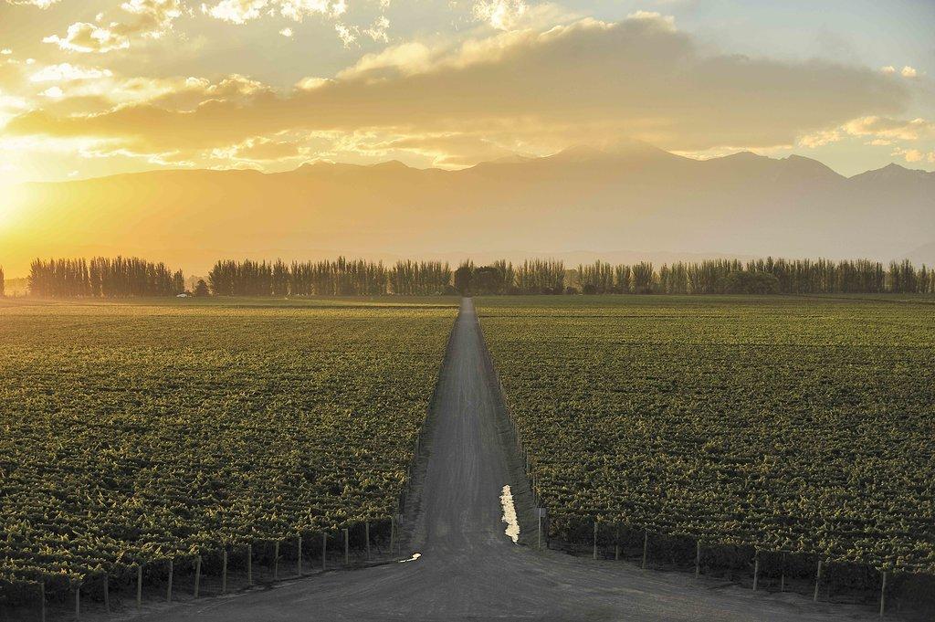 The famous vineyards in Lujan de Cuyo wine region