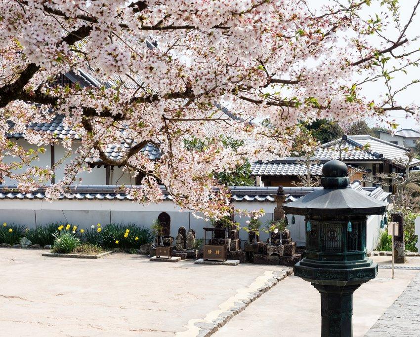 Dainichi-ji, Temple 13, in Spring