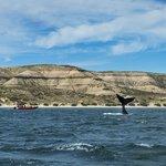 A whale sighting at Península Valdés