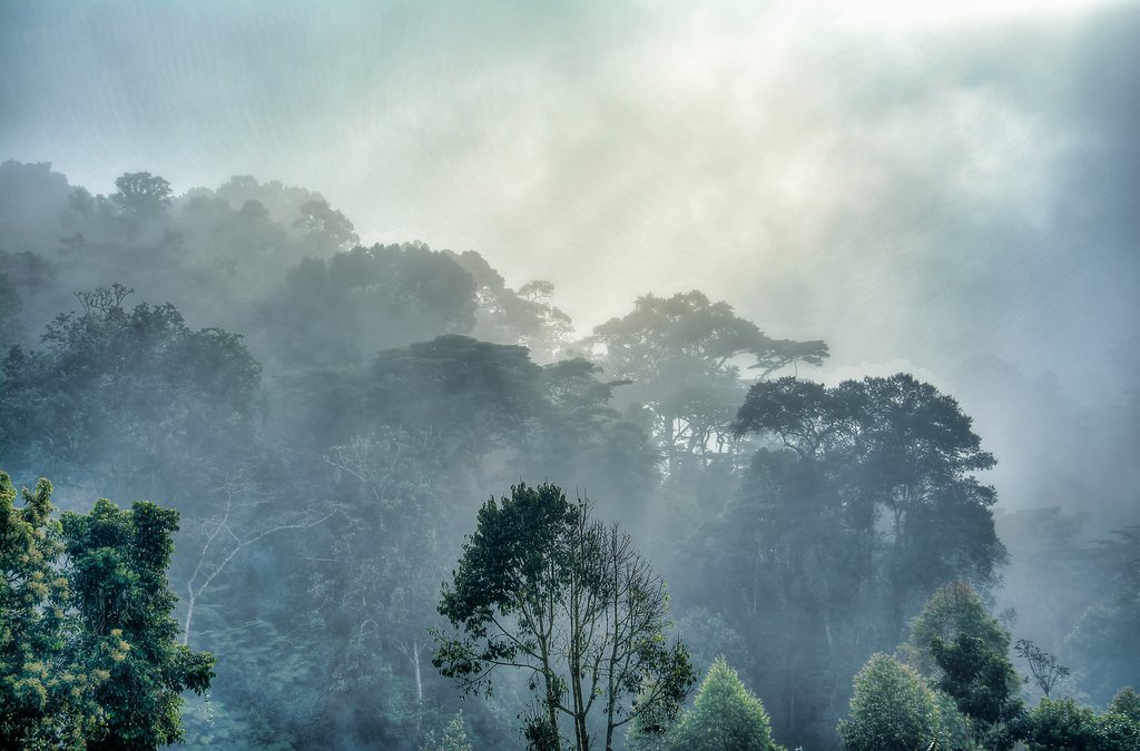 Morning mist at Bwindi Impenetrable Forest National Park