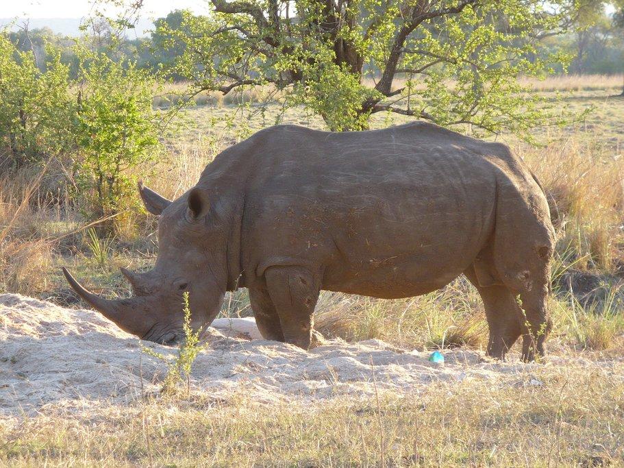 Rhino in Mosi Oa Tunya National Park
