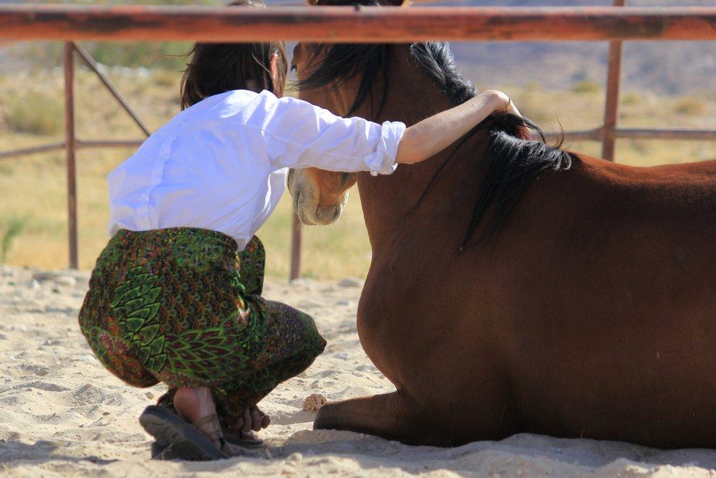 Horse coaching session in Wadi Rum