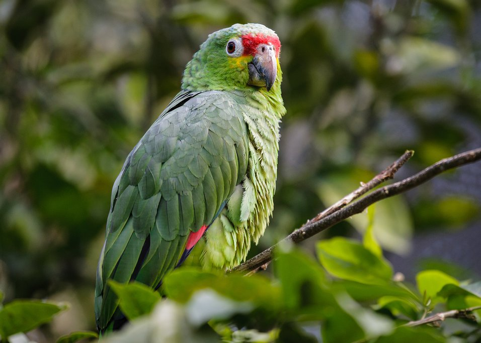 Spot exotic birds on a tour of the CATIE Botanical Gardens
