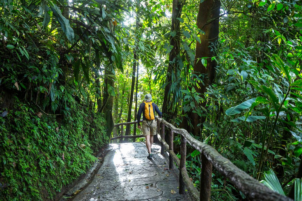 Hiking trails surrounded by tropical greenery