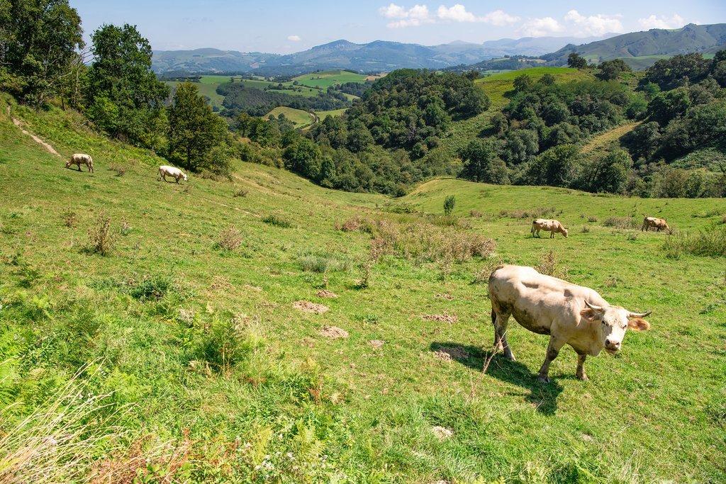 Enjoying Basque Country