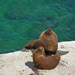 Sea lions relaxing before a swim in Puerto Pirámides