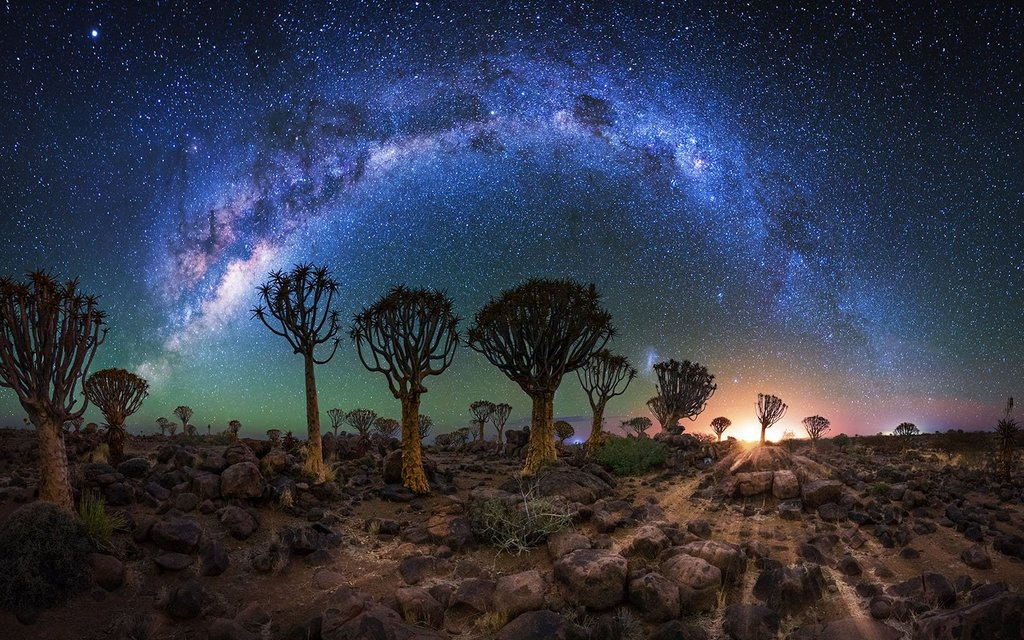 Quiver Tree Forest, Night Time, Namibia