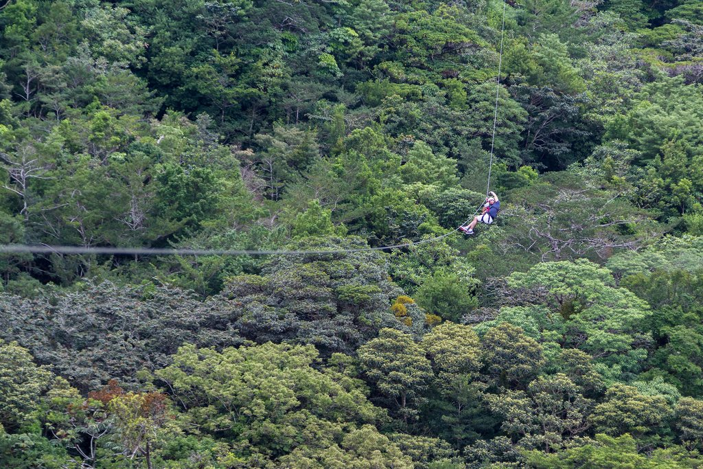 Zip-lining through the jungle canopy