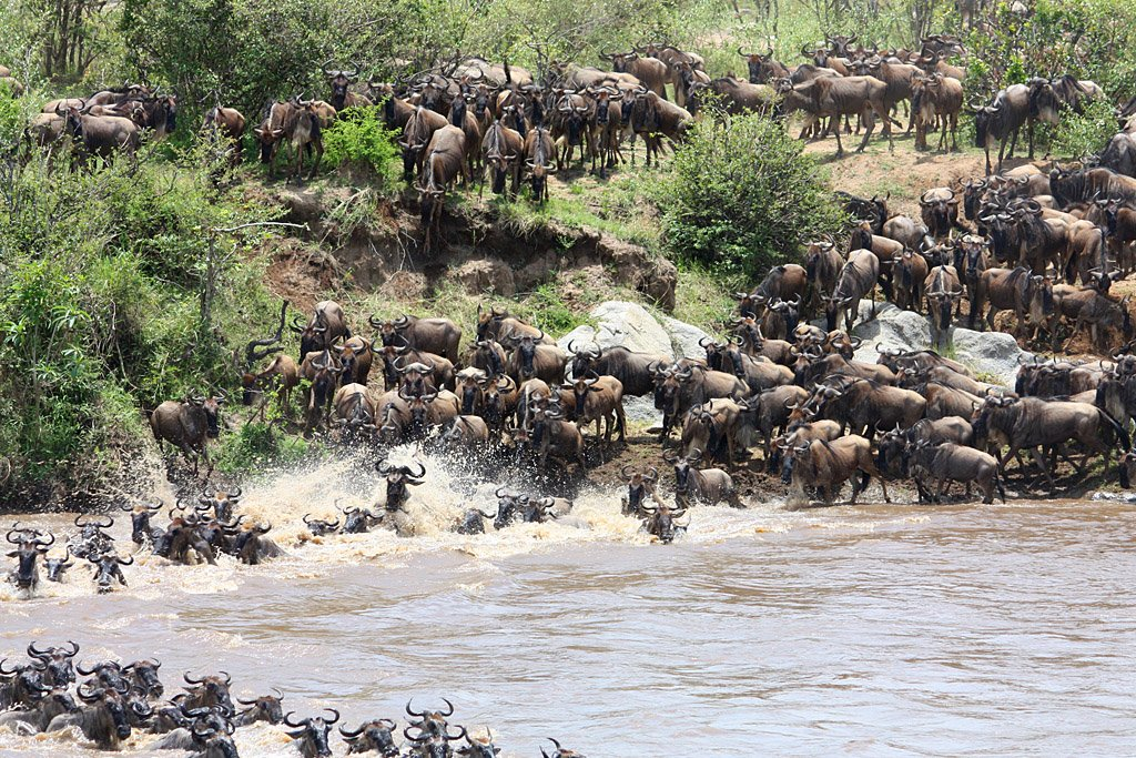 The Chaotic Crossing of the Mara River