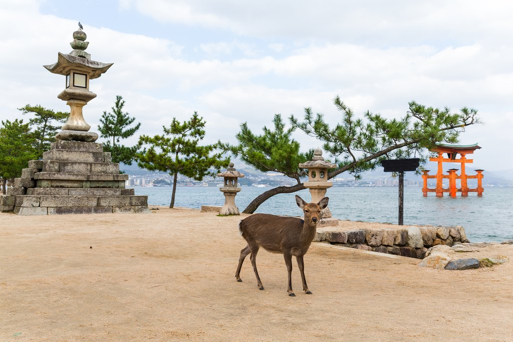 Torii and Deer on Miyajima