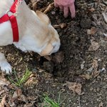 With the help of an expert, you can find prized truffles