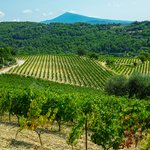 The vineyards of Gigondas