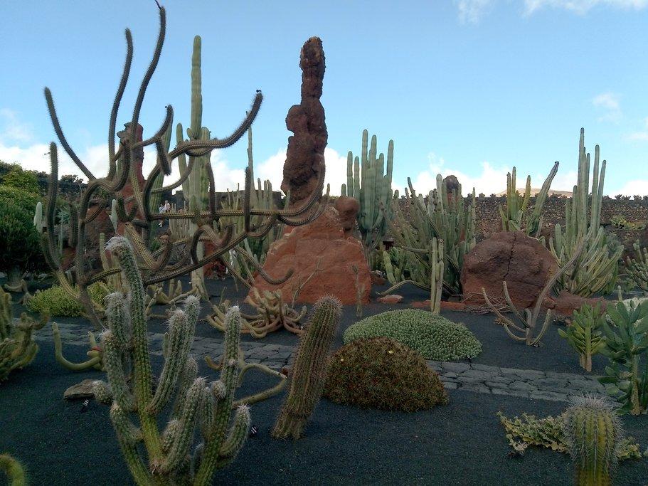 Cactus Garden of César Manrique