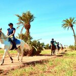 Horseback Riding in the Palm Groves