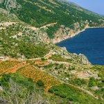 Vineyards on the southern coast of Hvar island