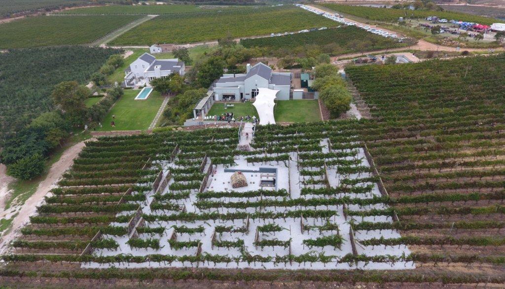 Southhill Vineyard maze