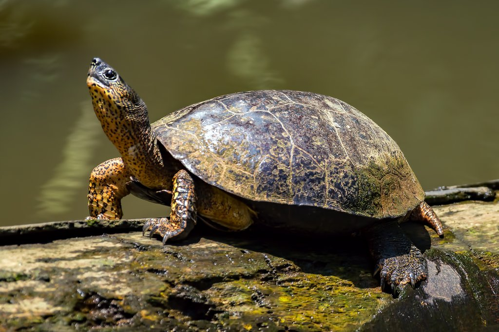Learn all about the turtle conservation history in Tortuguero