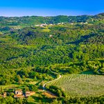 Vineyard-covered and forested landscape near Motovun