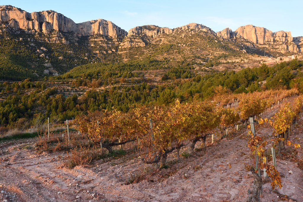 The Priorat wine region
