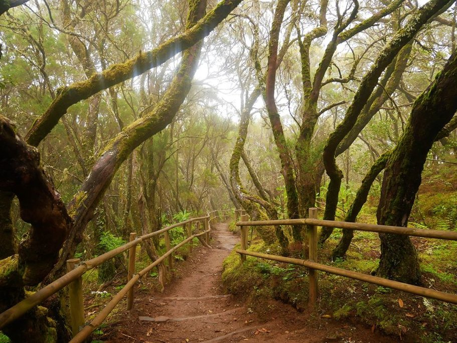 The Rainforests of La Gomera