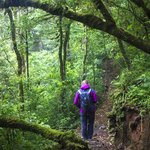Time for a nature hike in Monteverde