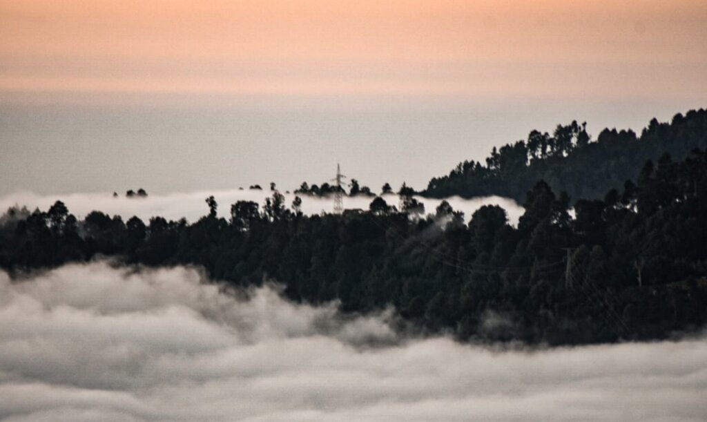 Hike in San Jose's Cloud Forest