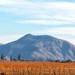 Vineyard outside of Santiago