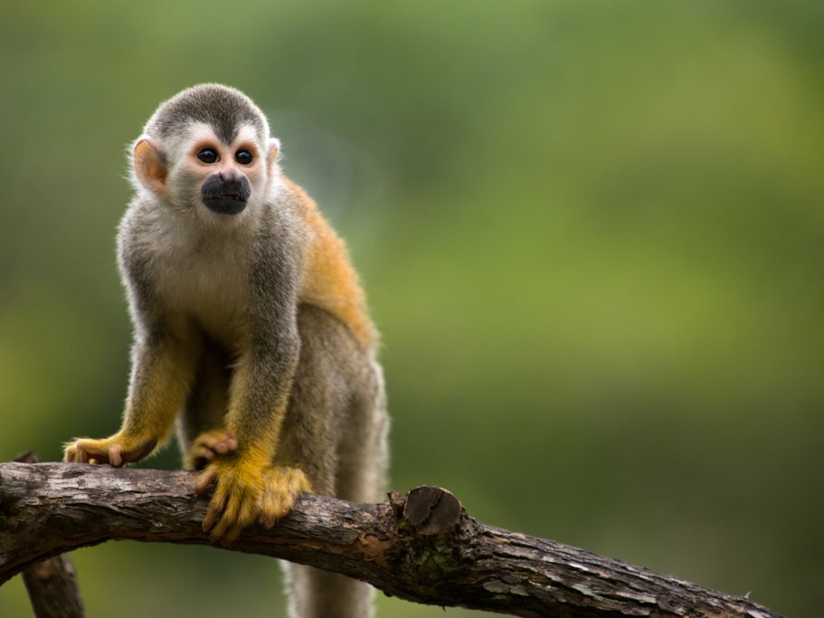 Manuel Antonio is one of the best places in the country for spotting monkeys